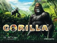 Онлайн автоматы Gorilla в Вулкан