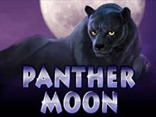 Panther Moon в клуб Вулкан
