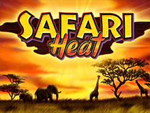 Автоматы Safari Heat в Вулкан
